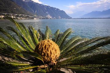 Obraz Szwajcaria - fototapety do salonu
