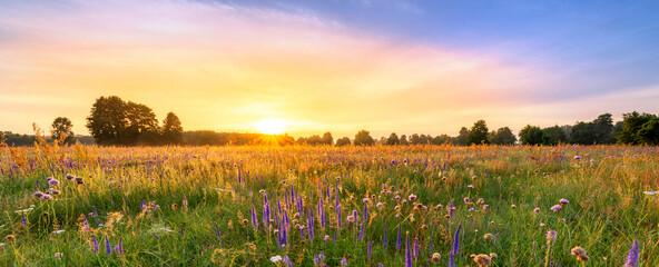 Beautiful foggy sunrise over field of flowers
