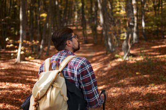Caucasian hipster male model outdoors in nature. Colorful landscape with trees, rural road, orange and red leaves, sun in autumn.