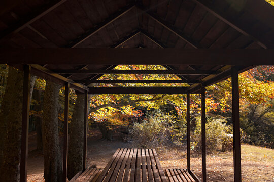 Empty small picnic pavilion or gazebo with table on in the woodland. Vivid morning in colorful forest with sun rays through branches of trees. Scenery of nature with sunlight