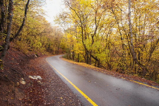 landscape autumn season in rainy day Travel and yellow leaves. Transportation. Empty highway in foggy woodland. Fall Road Trip