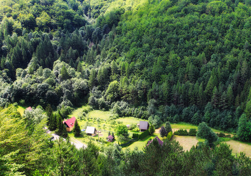 Natural forest with green meadow