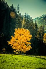 Herbstlicher Baum in einödsbach im Allgäu