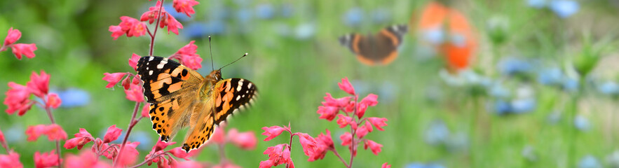 Obraz Schmetterling 855 - fototapety do salonu