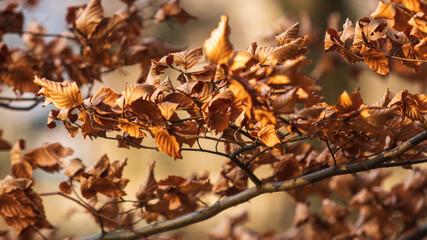 Jesienne li艣cie na ga艂臋zi drzewa