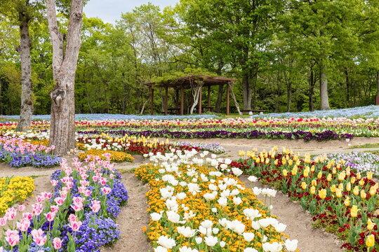 Colorful flowers in the field ,kagawa ,shikoku, japan