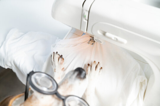 tailor sewing clothes design theme. Top view small dog in glasses using sewing machine making white textile shirt. Hobby and professional work in creative process of making clothes. White background