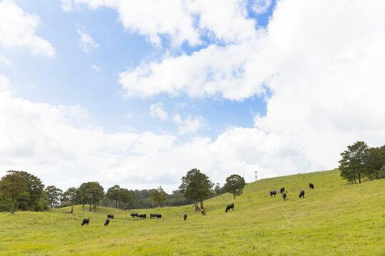 青空と牧場の牛たち