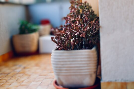 Close-up Of Potted Plant In Home Backyard