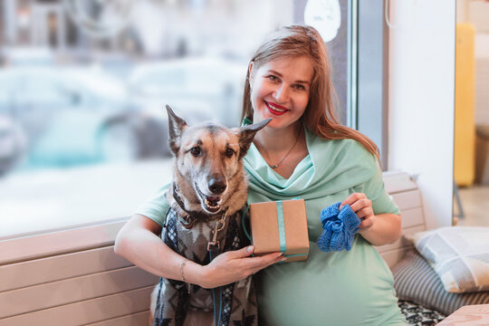 Portrait of smiling Caucasian woman in cafe with her dog in sweater. Pregnant woman is holding gift box and blue knitted bootee.