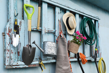 Fototapeta Beautiful plant, gardening tools and accessories on shed wall obraz
