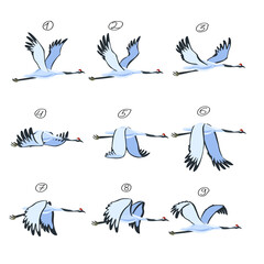 Fototapeta premium Crane animation. Bird animation, nine key frames. Cranes isolated on white background. Vector illustration.