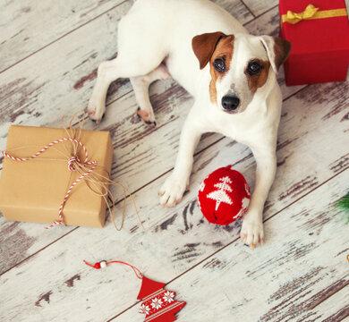 Dog at christmas decoration