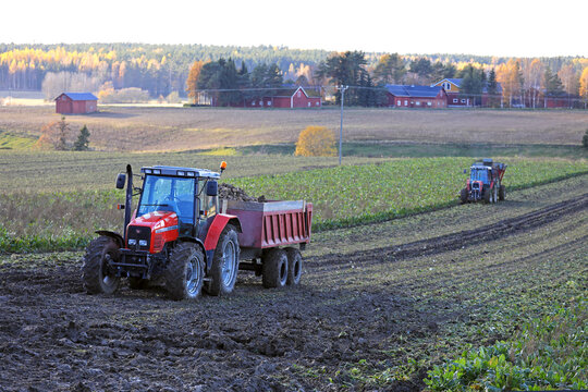 Tractors working in farmland and harvesting sugar beet on a beautiful day of autumn.