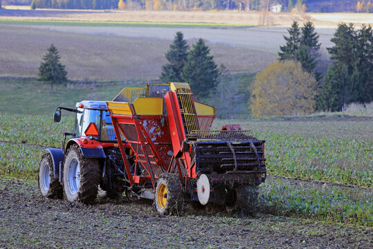 Tractor and harvester in field harvesting sugar beet in October in Finland.