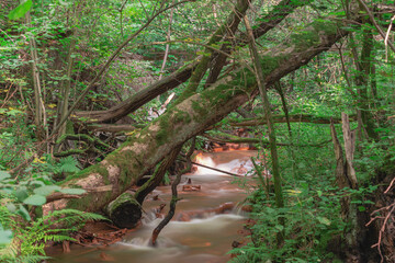 Fototapeta Spieniony, mały strumień płynący przez dziki las. obraz