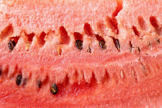 watermelon texture background