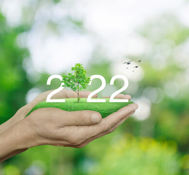 2022 white text with growing tree on green grass field in man hands over blur green tree in park, Happy new year 2022 ecological cover concept