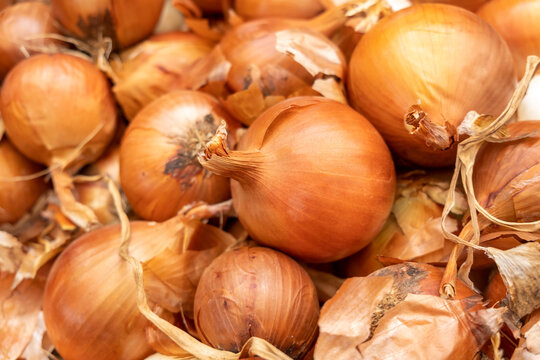 The new harvest onions sold at local farm market