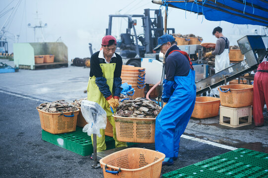 洗浄選別した帆立貝を運ぶ漁師