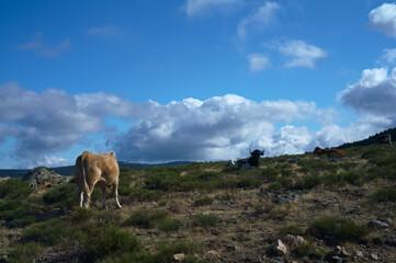 krajobraz góry zwierzęta krowy bydło natura