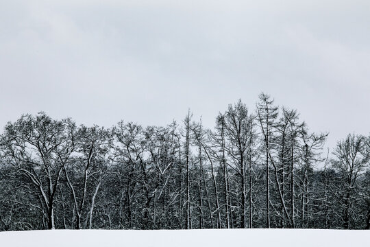 Black and white winter snow forest landscape