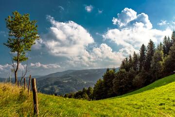 Fototapeta krajobraz, drzewa, niebo, pola, chmura, jesienią, zieleń, lato, górka, horyzont, blękit, pora roku, pejzaż, góry, przyroda, ekologia obraz