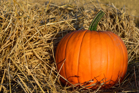 An orange Halloween pumpkin stands in dry straw in the country