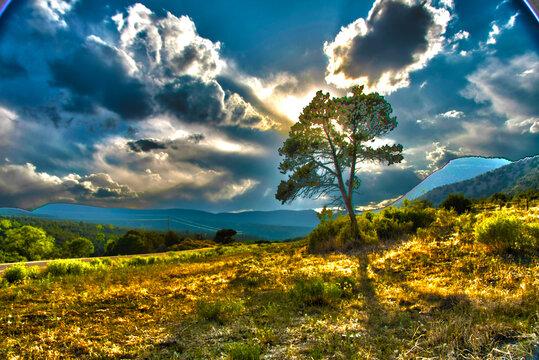Tree in Rural Landscape