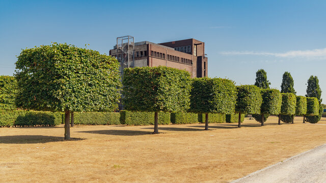 A row of pruned trees on a dried up meadow, with the ruin of an old coal bunker in the background, seen in the Nordsternpark, Gelsenkirchen, North Rhine-Westfalia, Germany