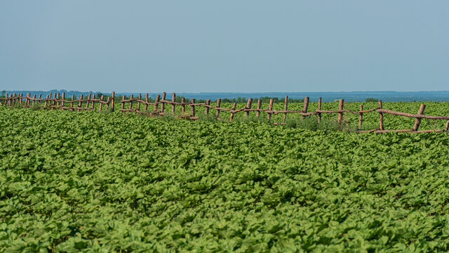 Wooden old fencing of green fields.