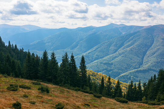 carpathian forested mountains in autumn. beautiful nature landscape on a cloudy day
