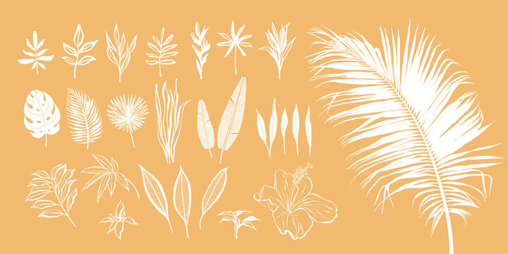 Set of abstract tropical plants. Vector hand-drawn elements in boho style.