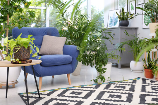 Comfortable armchair and beautiful houseplants in room. Lounge area interior