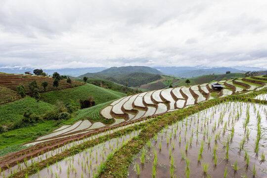 Green Terraced Rice Field in Pa Pong Pieng, Mae Chaem, Chiang Mai