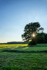 Natur mit großem Baum und Sonnenstern
