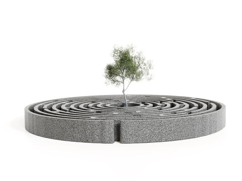 Olive tree growing in the center of concrete circular maze