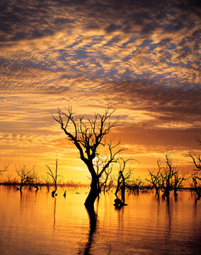 Menindee lakes, New South Wales at sunset.