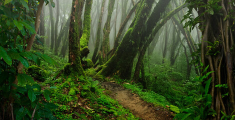 Fototapeta Tropical jungles with fog of Southeast Asia obraz