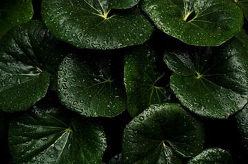 Fototapeta Leaves In The Rain obraz