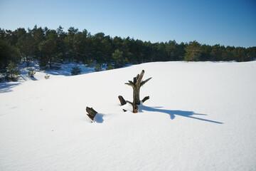 Fototapeta Zima, nadmorskie wydmy pokryte głębokim białym śniegiem. Krajobraz zimowy. Na pierwszym planie, wystający z białego puchu suchy pień sosny. obraz