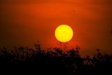 Fototapeta Silhouette Bird Flying Against Orange Sky obraz