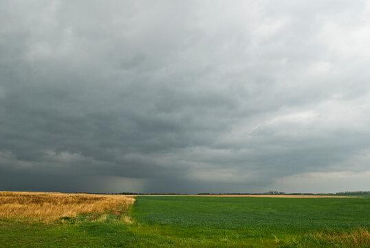 Severe thunderstorm over Kansas green winter wheat field.