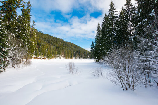winter landscape in mountains. beautiful scenery with coniferous forest on a blight sunny day. frozen lake covered with snow. synevyr national park, ukraine