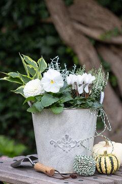 weiße Herbstblumen im vintage Blumentopf im Garten