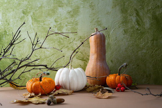 Autumn still life with naked branch and pumpkins copy space