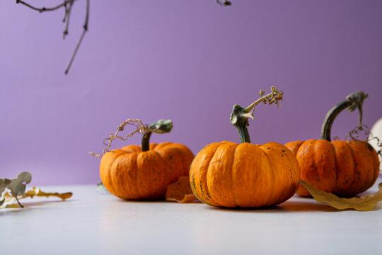 Autumn still life with orange pumpkin, Halloween concept