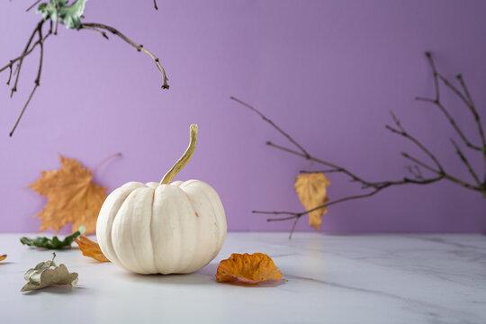Autumn still life with white pumpkin, Halloween concept