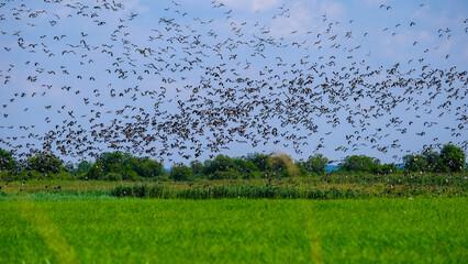 Autumn bird migrations