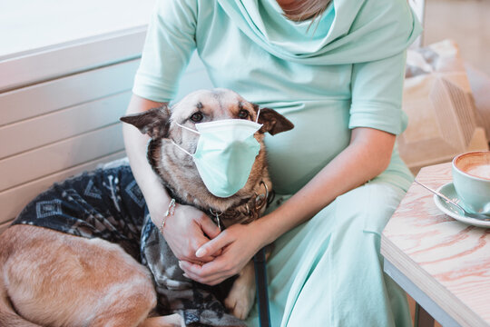 Dog in medical face mask in hands of its owner. Pet's care concept. Pregnant woman with dog in cafe.